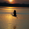 Desktop Screen Saver Lake Arlington Bird