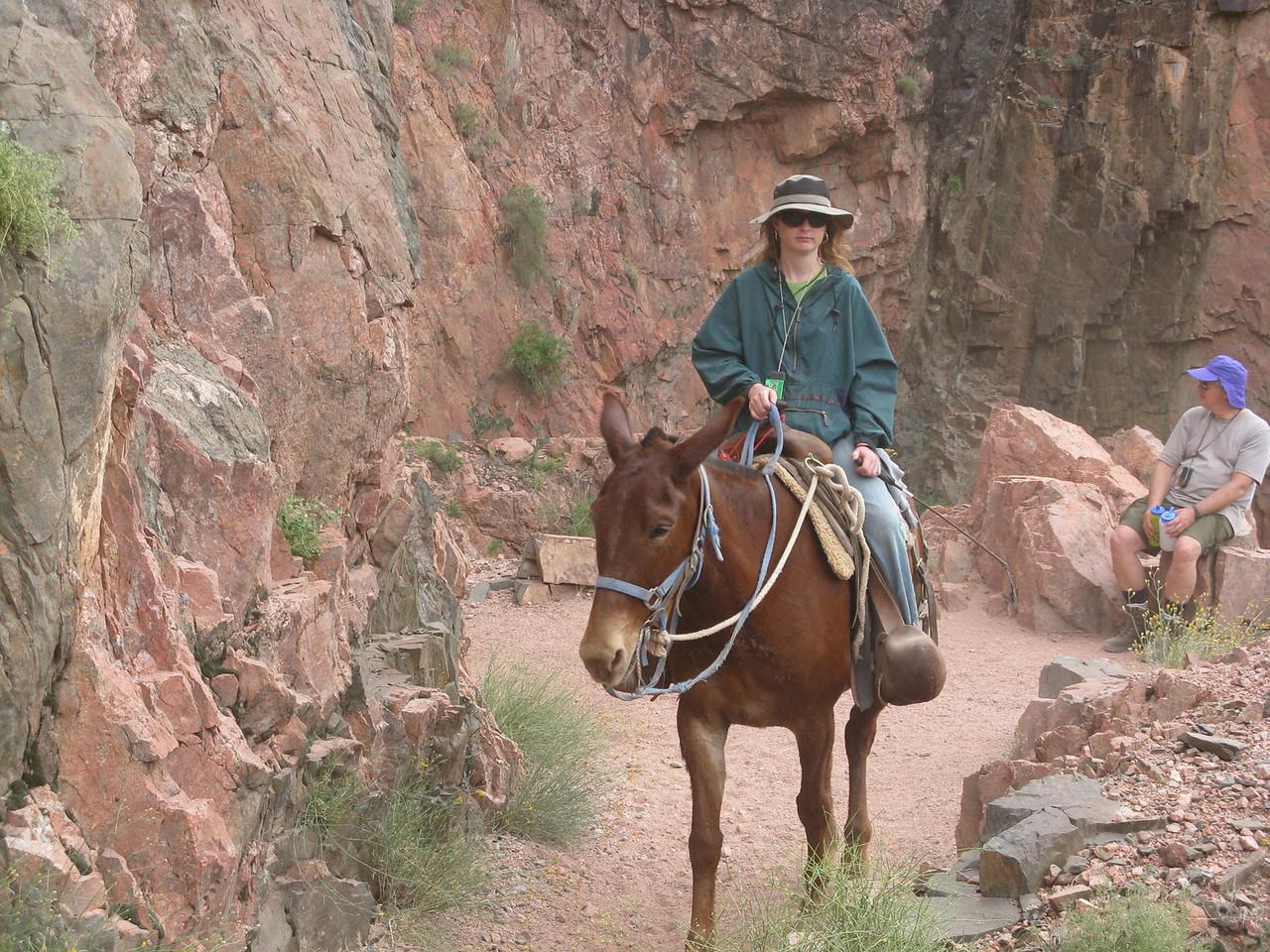 An auburn colored mule.
