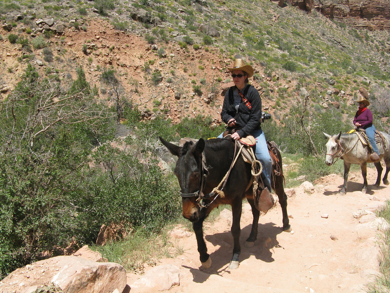 We were passed by mule riders going up the trail.