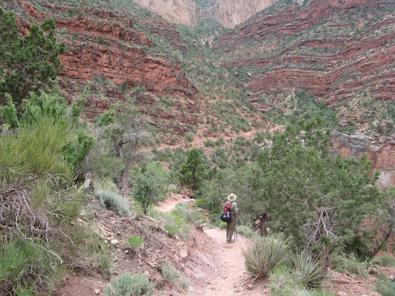 The environment changes again as we head into the Supai Group of rock layers.  Now junipers and pinion trees occur along the trail.
