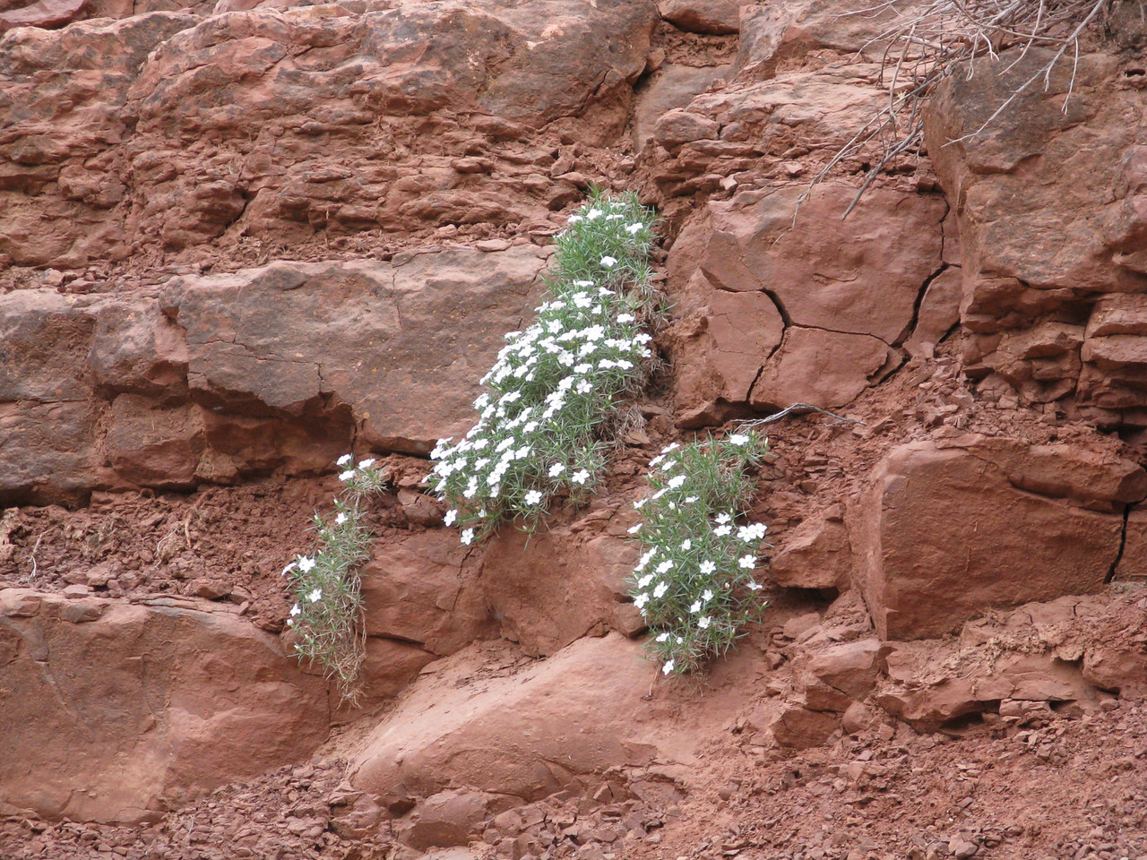 Wildflowers blossom in every type of rock layer.