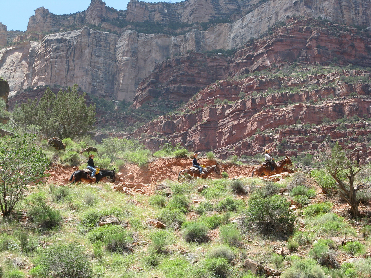 Shortly after passing us, we can see the mules on the trail far above us.