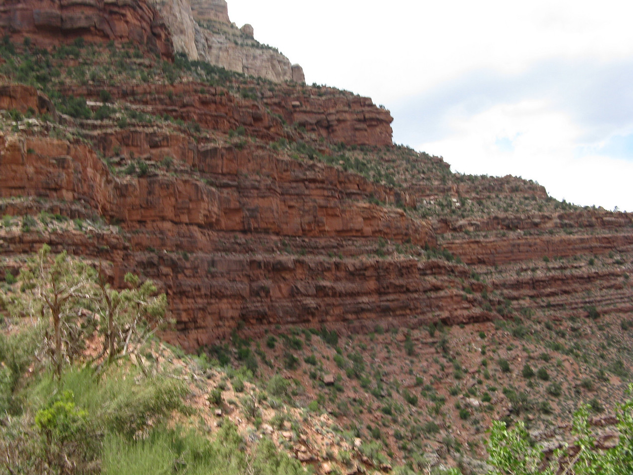 The evergreens and other plants dot the landscape in the Supai Group.