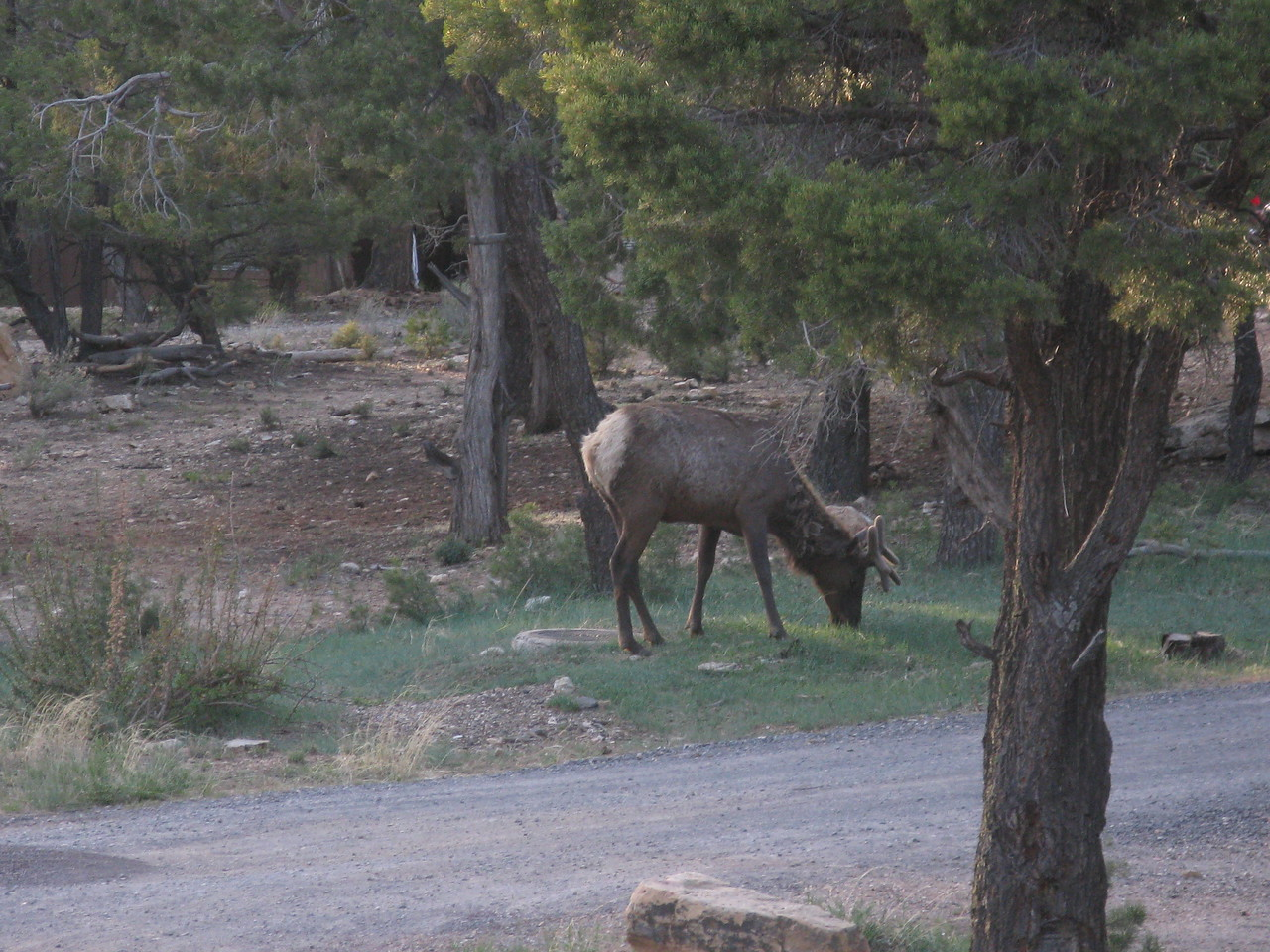 The elk paid no attention to us.