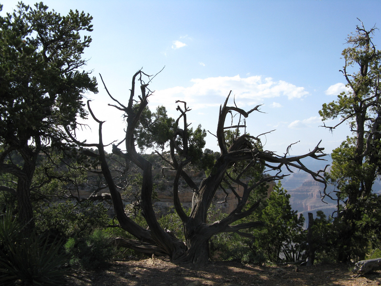 An interesting tree at an overlook.