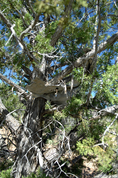 Considering the violent manner at which the aircraft broke apart in the ravine, it was not too surprising to find fragments of aircraft wreckage such as this still embedded in a tree.