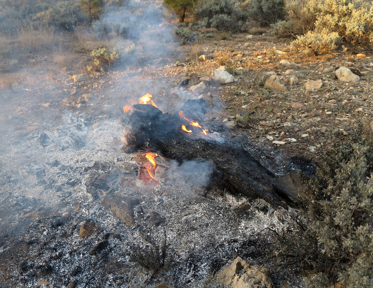 UPDATE: NOVEMBER 2013<br /> <br /> A prescribed burn (Flying J) took place during November 2013. The area of the crash site was apparently not marked as a historical site by Forest Service officials and some features of the site were destroyed. One such feature that was lost was the tree stump featured in the above photos that contained the embedded metal fragment.