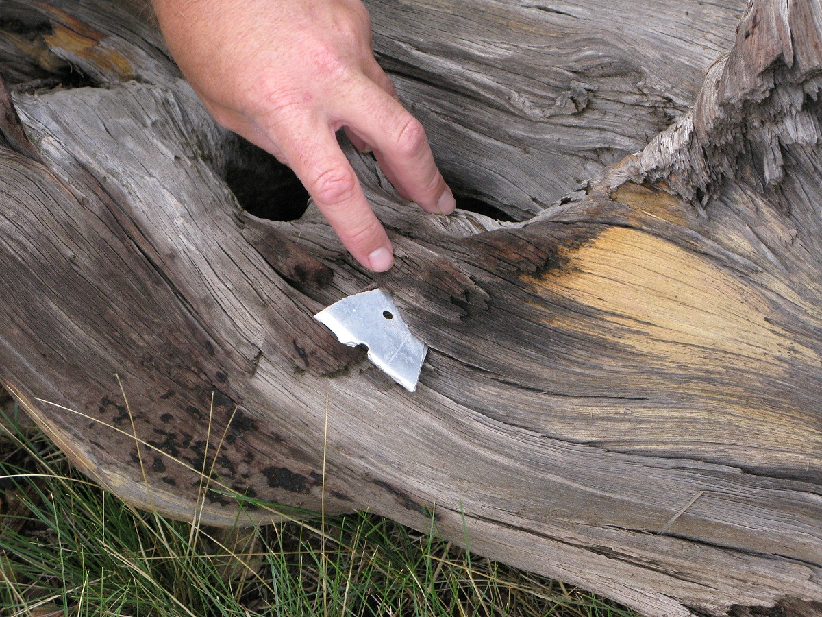 The fragment was embedded in the tree well over an inch and could not be moved.