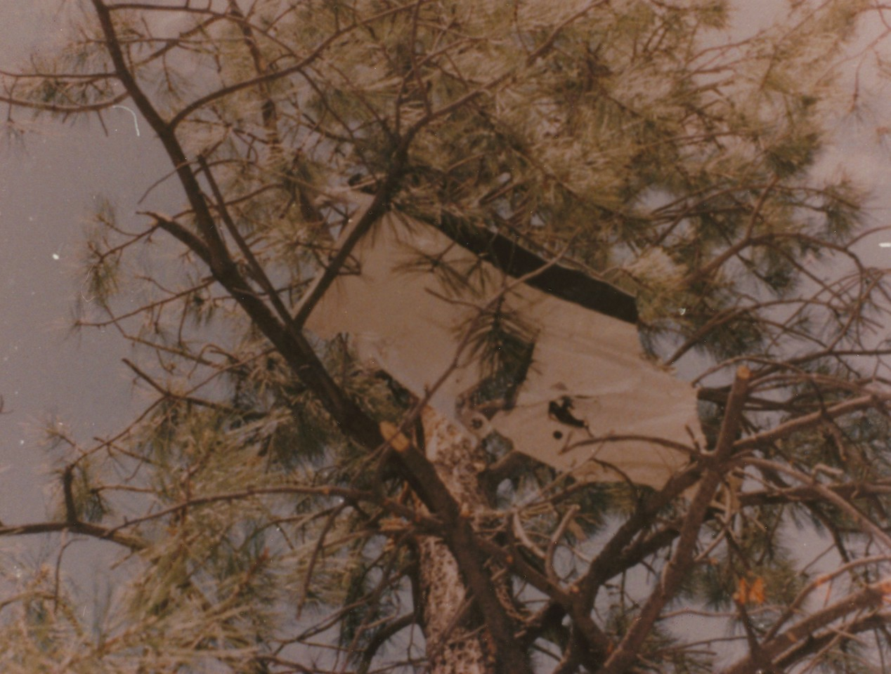 FIRST POINT OF IMPACT<br /> <br /> This horizontal stabilizer fragment was wedged about 60 feet in the top of a pine tree. <br /> <br /> With extensive tree impact damage to the aircraft's tail section, the aircraft was no longer controllable and impacted nose first into the ground.