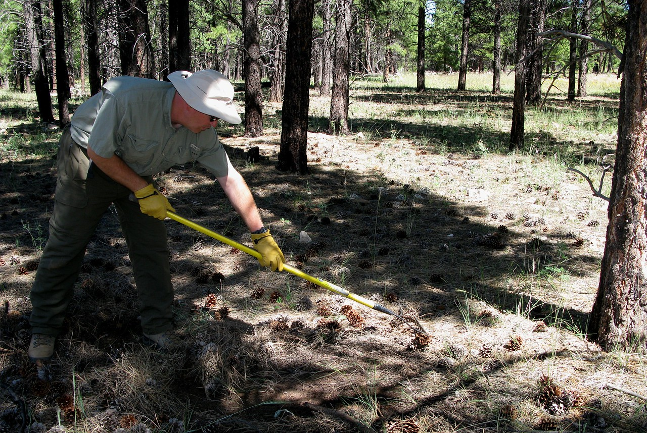 In some areas I had to use a garden rake to clear the top layer of pine needles in an attempt to locate the main wreckage burn area.