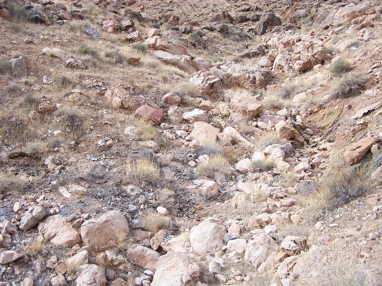 Burn area at TWA main impact site. The bottom of ravine contained the majority of burned wreckage. March 2006 visit.