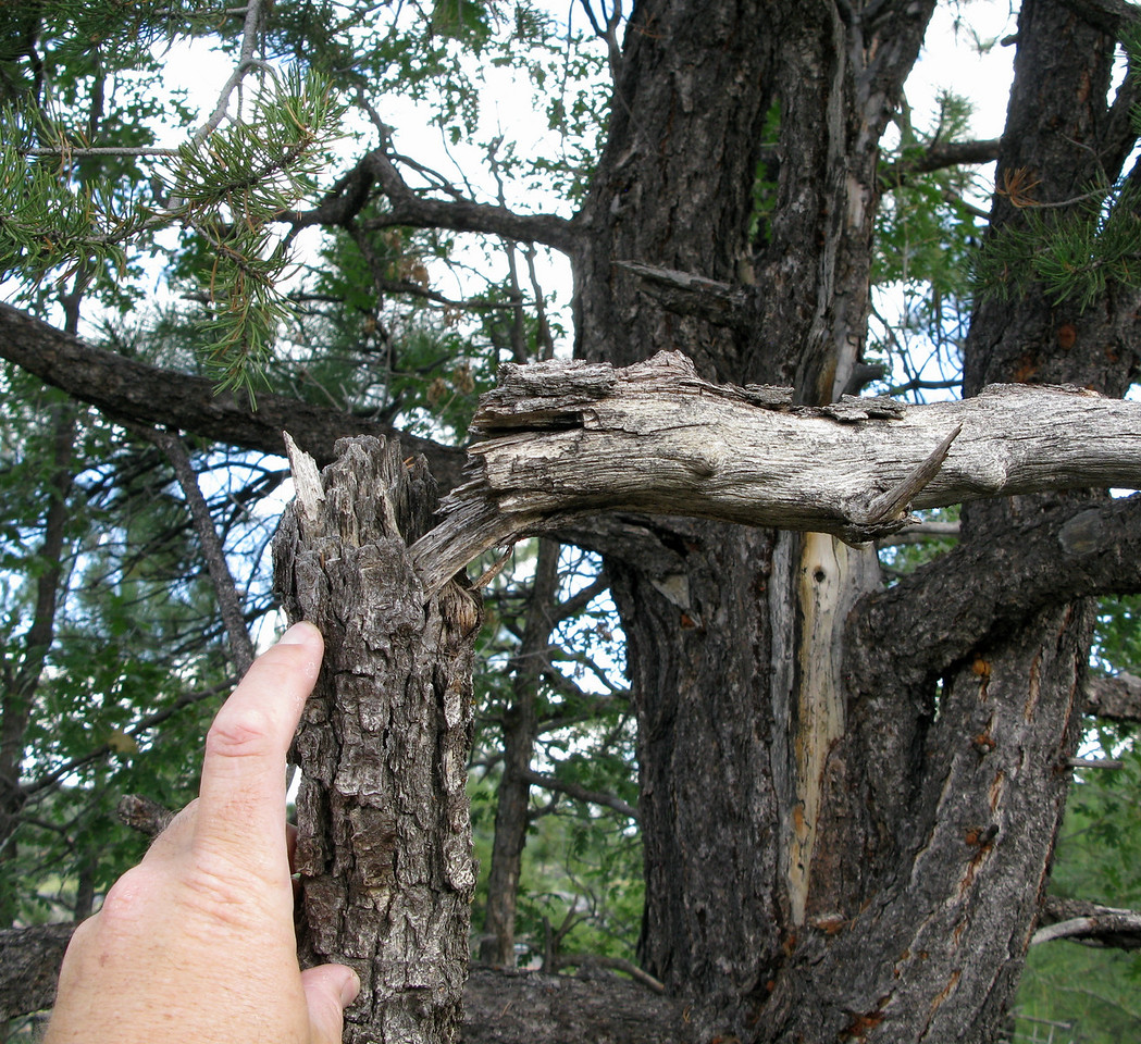 All of the damage to the trees was noted only in the wreckage path and the fracture damage was consistent to the direction of the aircraft travel.