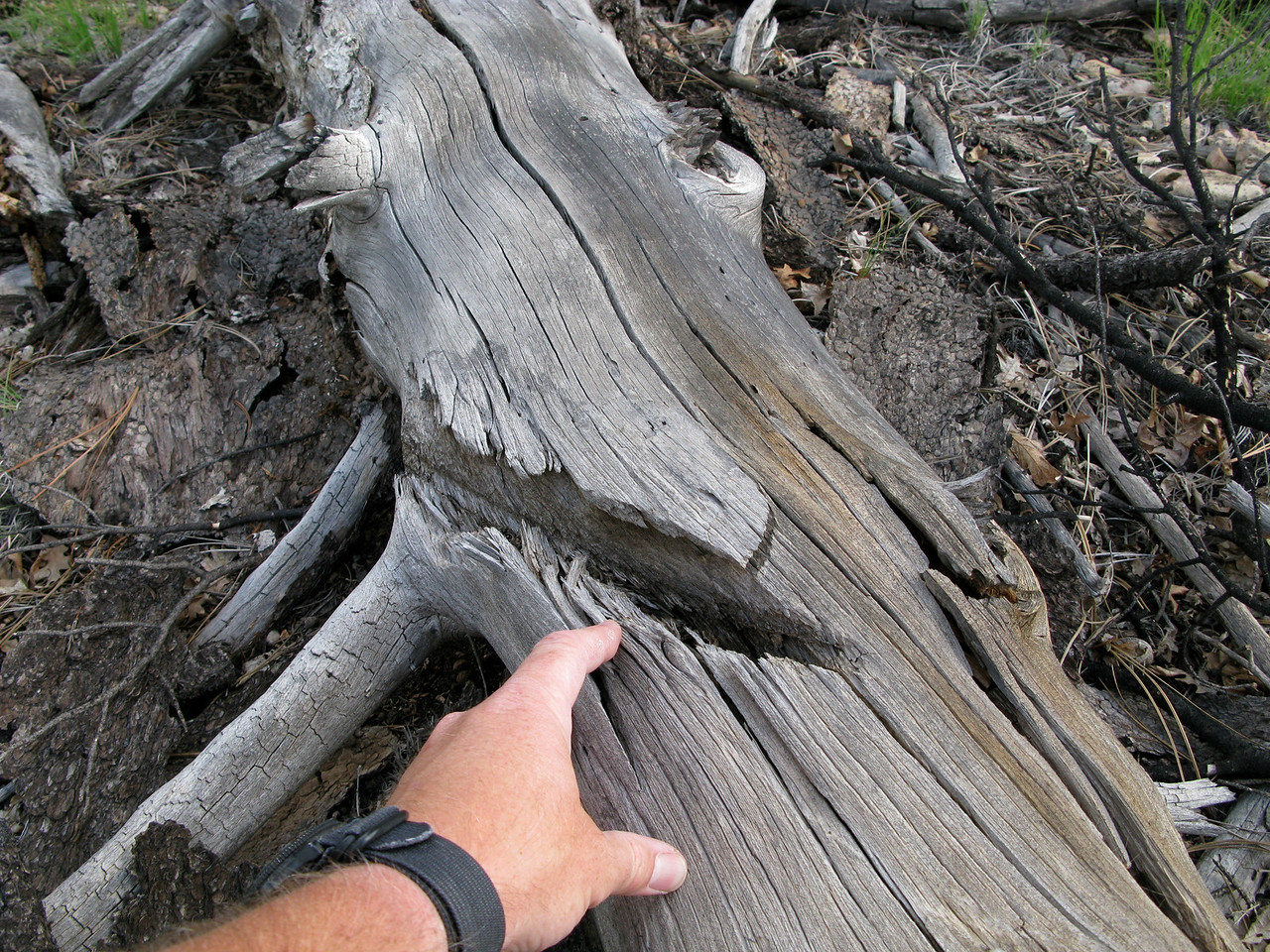 I looked for other propeller tree strike damage at the site, but this cut was the only one I was able to locate.