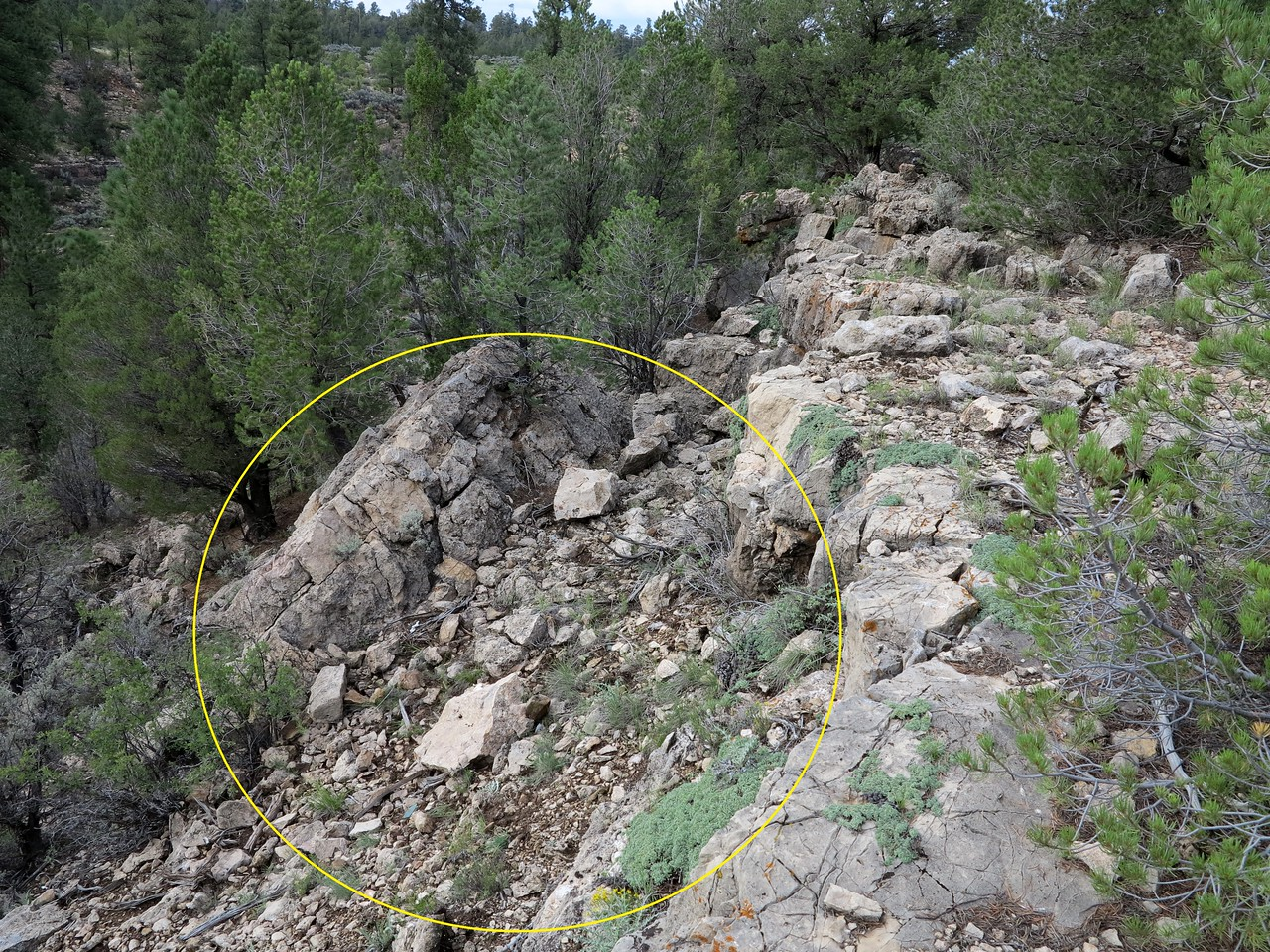 The yellow circle depicts the location where a majority of wreckage debris was located. A few items found within the debris helped provide identification to the crash site.