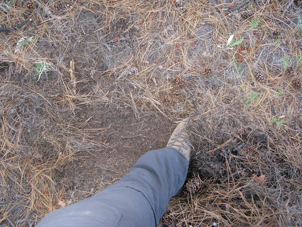 I brushed away a lot of pine needles, but still no aircraft wreckage could be located.