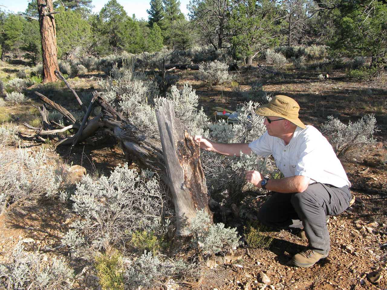 This remnant of a tree was broken by impact and partially burned from the post crash fire. I was glad to have locate and document the site prior to the prescribed burn.