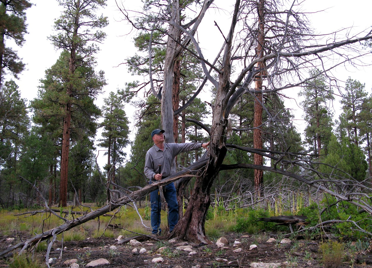 The dead trees near were the aircraft fuselage came to rest exhibit burn damage from the post crash fire.
