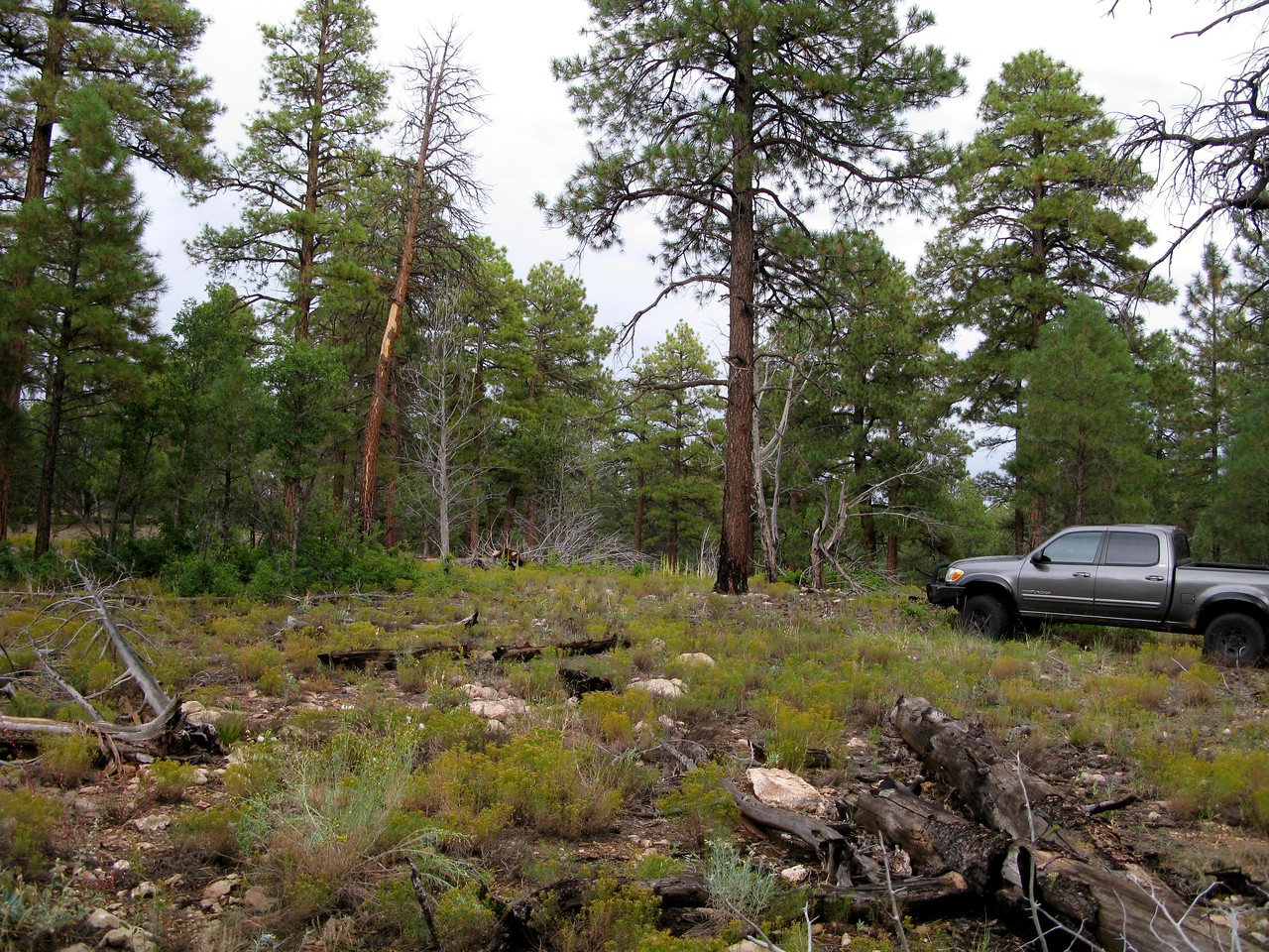 The crash site is located in a moderately forested area of the Kaibab National Forest on the Grand Canyon's south rim. <br /> <br /> The trees are comprised of a combination of Spruce and Ponderosa Pine which grow to an average height of 60-80 feet. The forest floor is rocky and covered with fallen trees.<br /> <br /> The record is not too promising. Most aircraft that crash in this terrain have resulted in fatalities.