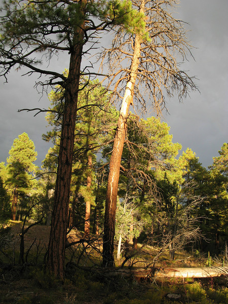 The bark was ripped from this tree during Flight 45's descent path to the forest floor.