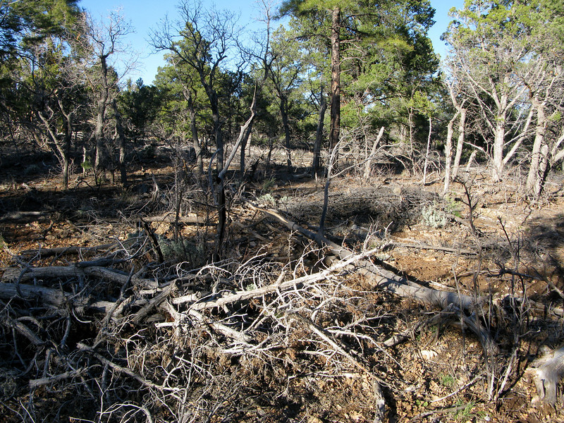 At first glance, there is nothing in the forest that indicates a crash site. To make the search even more difficult, the U.S. Forest Service has thinned the tree-line over the years by clear-cutting the vegetation.