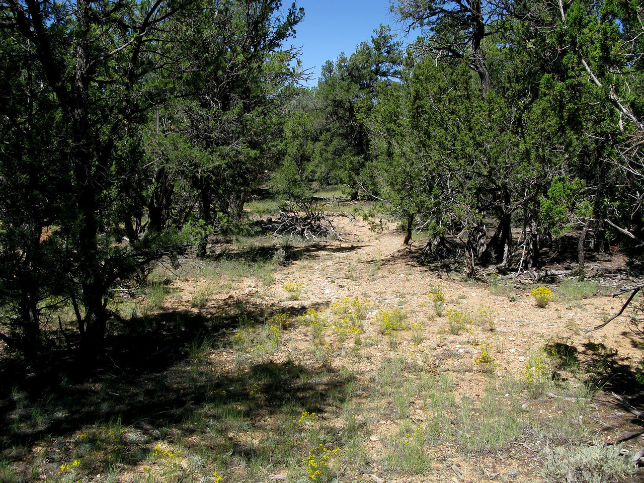 This firebreak located near the first tree impact was cut by forest service crews at the time of the accident to keep the fire from spreading.