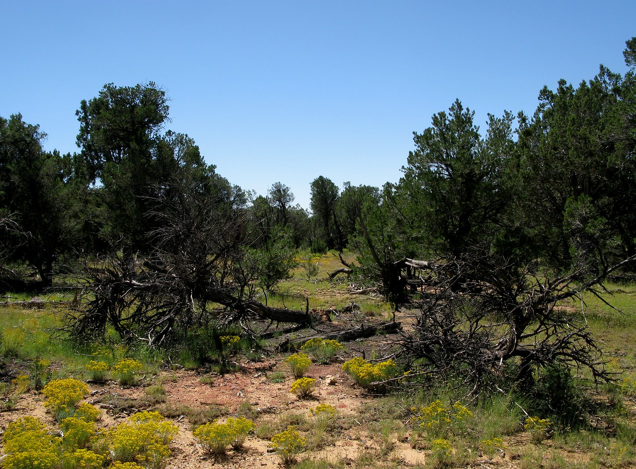 The path made by the crashing aircraft was still visible. The swath of broken and burned trees is oriented on a magnetic heading of 165 degrees and is about 230 feet in length.