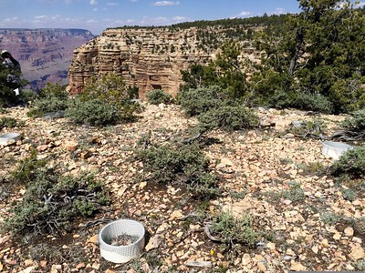 Wilderness Volunteers: 2017 Grand Canyon NP Service Trip