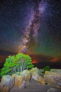 """Night life in the Grand Canyon,"" Grand Canyon National Park, Arizona"