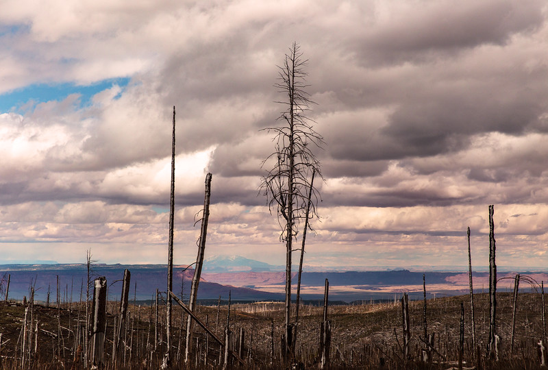 Grand Canyon and San Francisco Peaks Through the Burned Forest