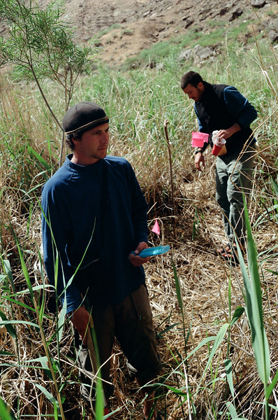 Collecting ground traps for whatever insect fell in them the night before.