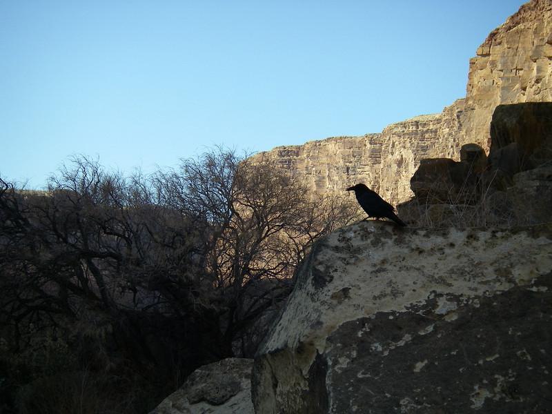 Grand Canyon '10 173