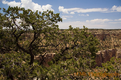 Looking west towardsTrailview Overlook from Grand Canyon Village.