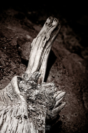Drift wood at South Canyon.