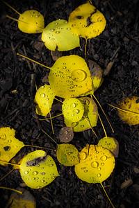 Leafy Tears