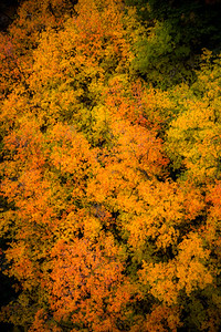 Gentle Fall Foliage