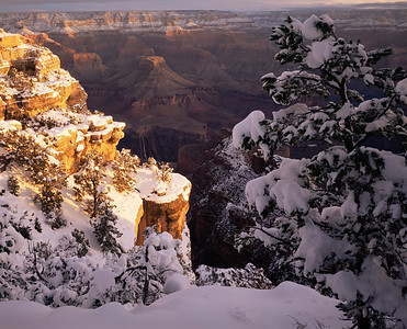 Grand Canyon Natn'l. Park, AZ/Sunrise on the buttes and temples below East Rim Drive with heavy snow laiden pinyon pines (Pinus edulus) foreground. 195h7