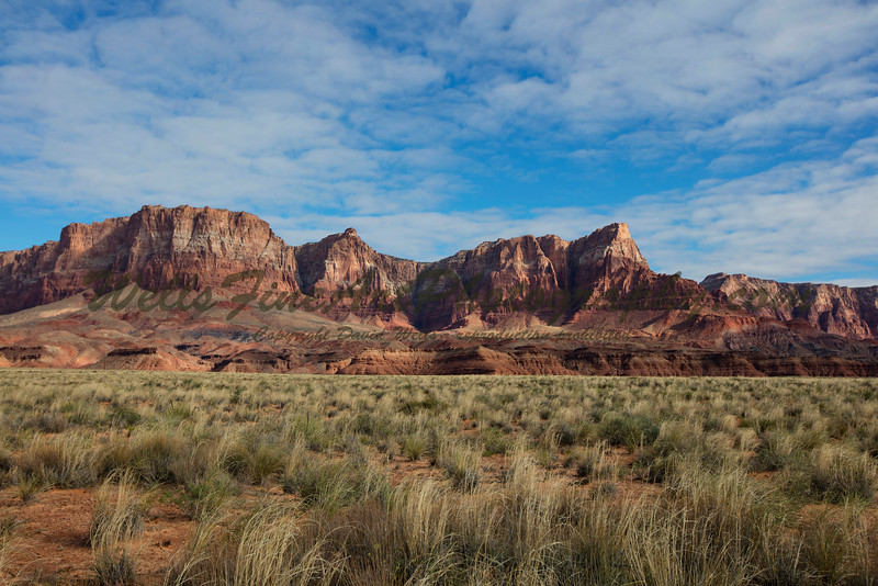 Indian Rice Grass and Vermillion Cliffs