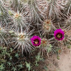 Cactus up Lava Chuar Canyon