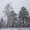 March 1st snowfall along Highway 64 north of Williams, Arizona.