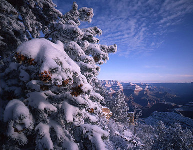 Grand Canyon National, AZ/Park, South rim, Grandview Point. Snow covered Pinyon pine (Pinus edulus) with West Rim in the background. 1292h2