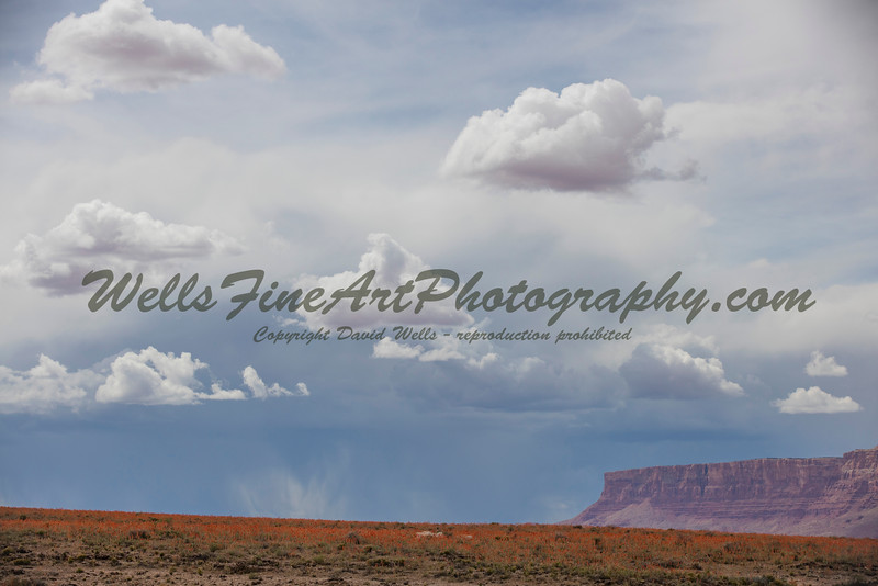 Sky and a field of Globe Mallow near Vermillion Cliffs