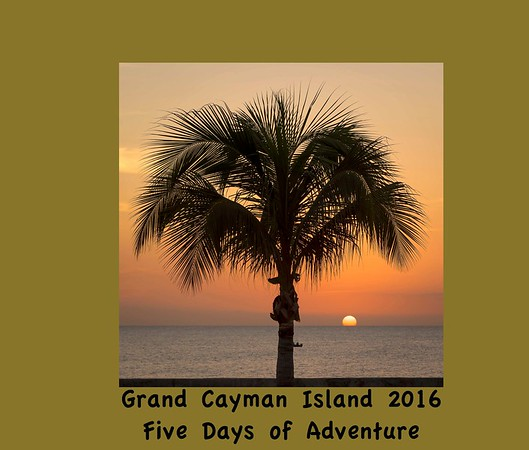 Grand Cayman Adventure