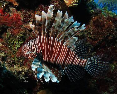Grand Cayman Island 2014