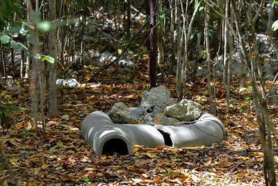 Blue Iguana hide