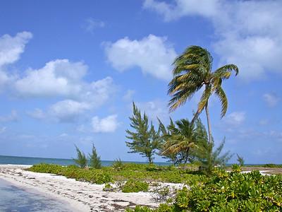 Grand Cayman, February 2004 252