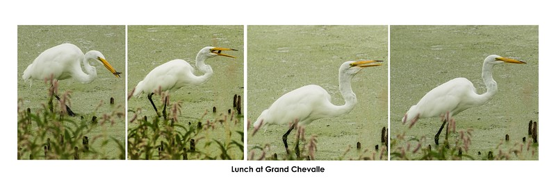 "This sequence of four picture poster is set to print on 36""wide X 12"" high"