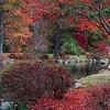 Japanese Garden - Fall