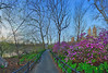 Azalea Walk, Central Park, NYC