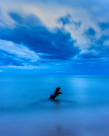 The Lonely Driftwood