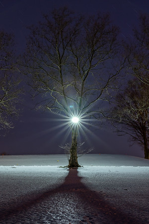 A Tree's Inner Light